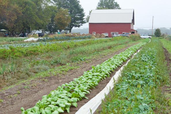 Ray Bradley's barn and fields